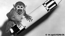 Bildergalerie Tiere im Weltall Affe Baker (imago/UIG/NASA)