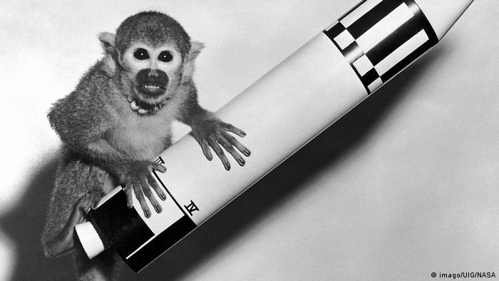 monkey on a toy rocket (imago/UIG/NASA)