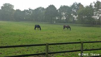 Коні - справжній скарб регіону Емсланд
