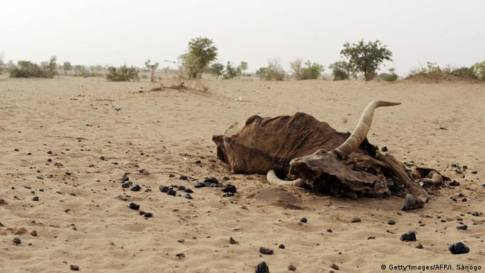 Ein Tierkadaver liegt auf einem ausgetrockneten Boden im Niger