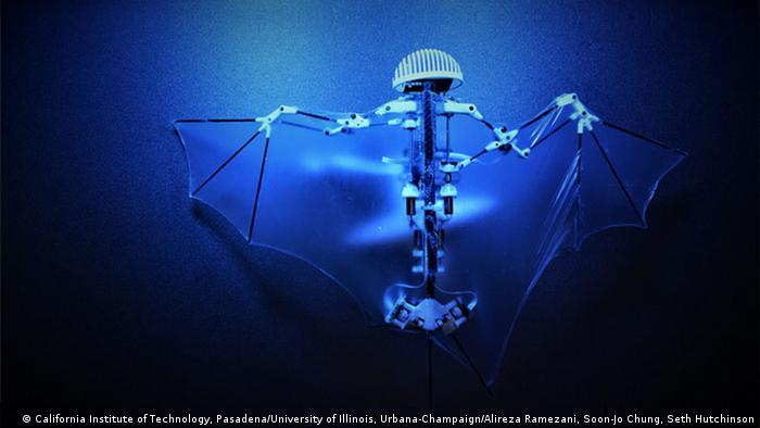 Soon-Jo Chung, Alireza Ramezani, Seth Hutchinson: 'Bat Bot' (2017) (© California Institute of Technology, Pasadena & University of Illinois, Urbana-Champaign)
