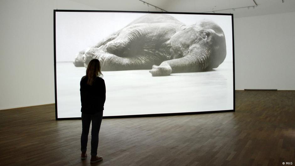 Tiere. Respekt, Harmonie, Unterwerfung″ - eine Ausstellung | Kunst ...