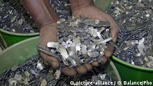Kobalt Metall (picture-alliance / © Balance/Pho)