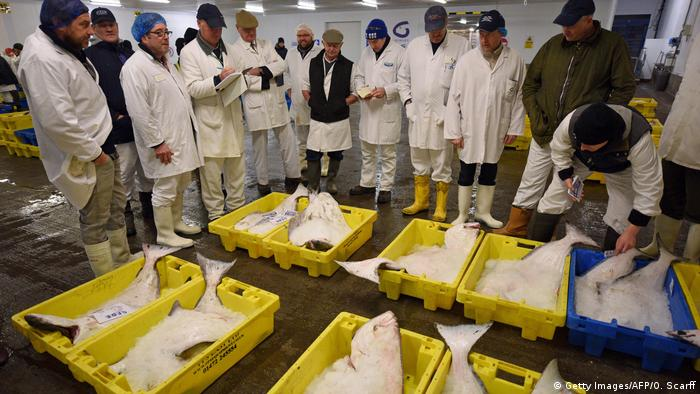 UK Fischversteigerung in Grimsby (Getty Images/AFP/O. Scarff)