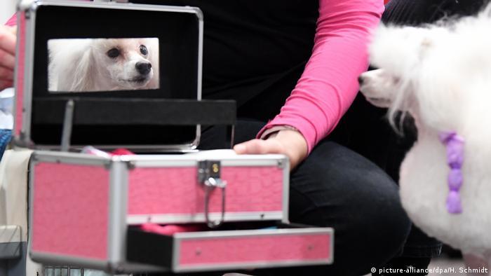 Deutschland Leipzig World Dog Show (picture-alliance/dpa/H. Schmidt)