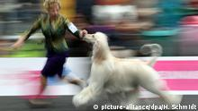 Deutschland Leipzig World Dog Show (picture-alliance/dpa/H. Schmidt)