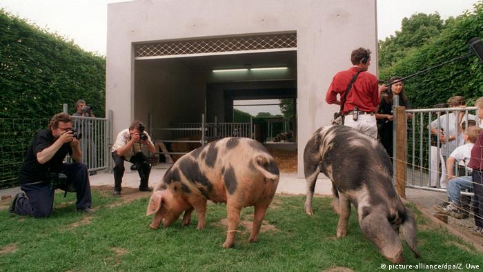 Deutschland Kassel - Stall für Schweine und Menschen auf der Documetna von Rosemarie Trockel (picture-alliance/dpa/Z. Uwe)