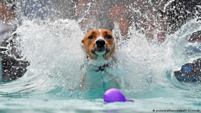 World Dog Show Leipzig Schwimmen Tauchen (picture-alliance/dpa/H.Schmidt)