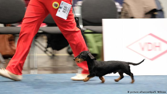 World Dog Show Leipzig (picture alliance/dpa/S. Willnow)