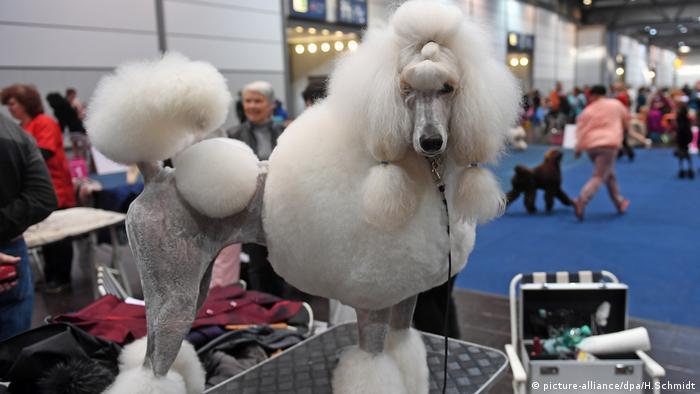 World Dog Show beginnt (picture-alliance/dpa/H.Schmidt)
