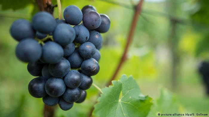 'Oldest' evidence of grape wine-making dates to 8,000 years ago, say archaeologists