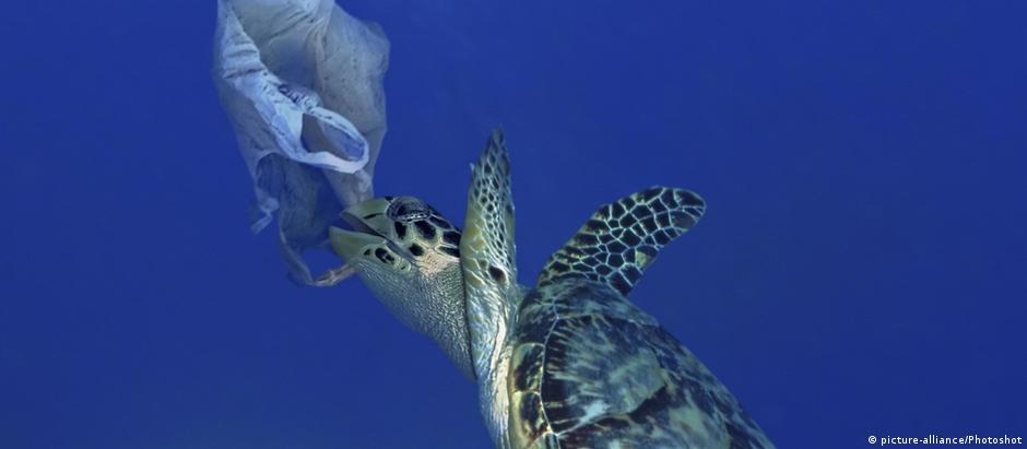 Tartaruga marinha tenta comer sacola plástica em Portugal