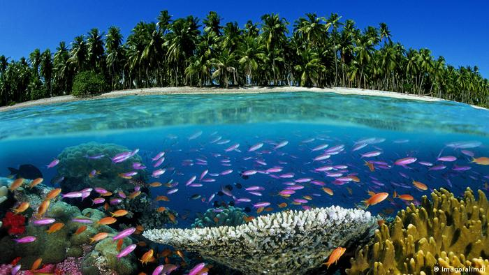Tropical coral reef in Fiji, South Pacific Ocean