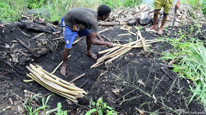 São Tomé und Príncipe - Holzstämme werden sorgfältig angepasst, um Kohle zu produzieren (DW/J. Rodrigues)
