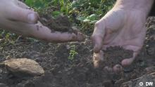 eco@africa Hands and soil (DW)