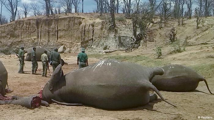 Dead elephants in Zimbabwe's Hwange National Park (Reuters)