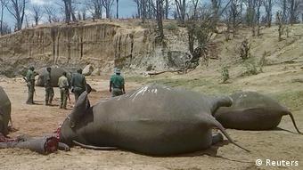 Simbabwe tote Elefanten im Hwange National Park