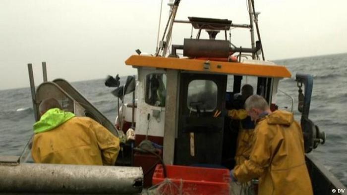 DW Sendung Fokus Europa Großbritannien Fischerei (DW)