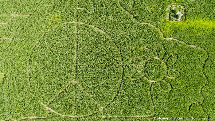 The peace sign in a cornfield in Germany (picture-alliance/dpa/J. Stratenschulte)