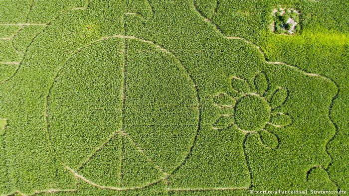 Deutschland Maislabyrinth als Peace-Zeichen (picture-alliance/dpa/J. Stratenschulte)