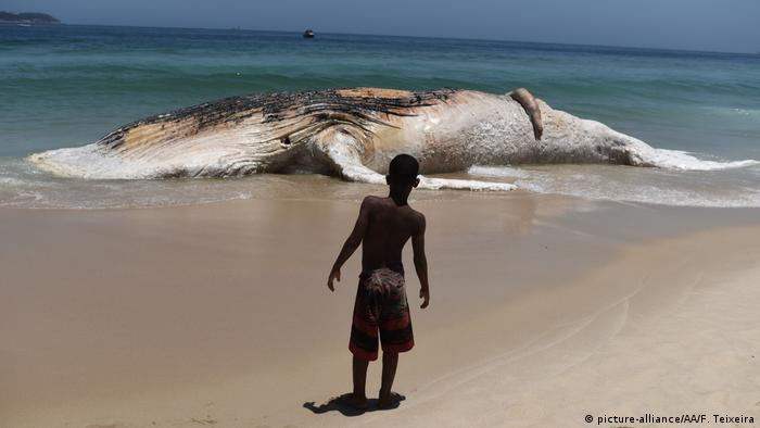 A boy looks at a 30 tons weighs dead whale after it stranded on Ipanema Beach coast in Rio de Janerio, Brazil
