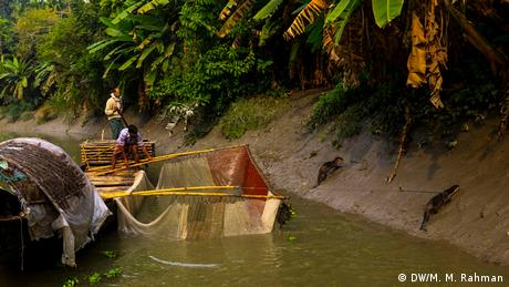 Bangladesch Fischen mit Ottern (DW/M. M. Rahman)