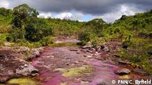 Cano Cristales river in the National Park La Macarena in Colombia (PNN/C. Byfield)