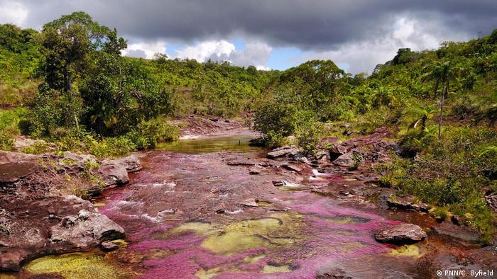La Serranía de la Macarena ha convivido con la guerrilla, las Fuerzas Militares y los cultivos de coca.