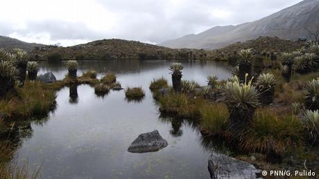 Landscape view of the typical plants of Colombia's highlands at Cocuy National Park (PNN/G. Pulido)