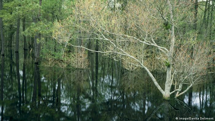 The Great Dismal Swamp spanning Virginia and North Carolina (Imago/Danita Delimont)