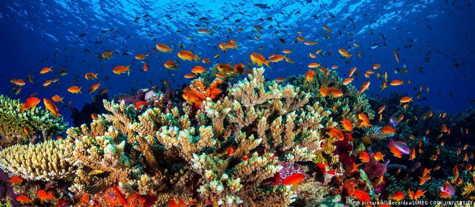 Biodiversidade ameaçada de extinção no Great Barrier Reef