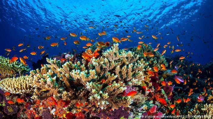 Great Barrier Reef vor der Küste von Queensland Australien