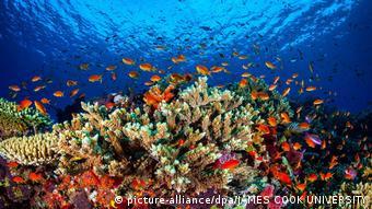 Στο 30% περίπου των κοραλλιογενών υφάλων η λεύκανση πήρε μεταξύ 2014 και 2017 ιδιαίτερα επικίνδυνες διαστάσεις
