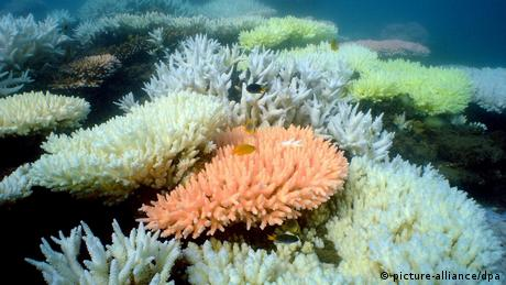 Great Barrier Reef (picture-alliance/dpa)