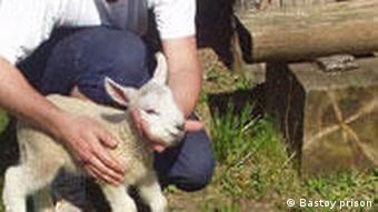 Man petting lamb