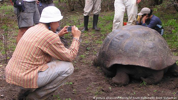 Las tortugas gigantes llegaron hace tres o cuatro millones de años a la región volcánica de Galápagos, la cual es parte de la reserva de la biósfera y sirvió al naturalista inglés Charles Darwin para que desarrollara la teoría sobre la evolución de las especies