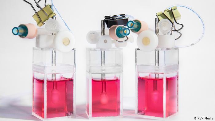 Novoheart - three pulsing hearts in three separate jars