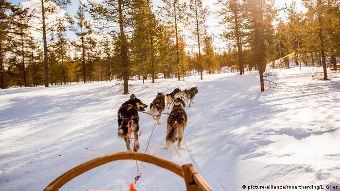 Финландия е страната на красивите снежни пейзажи. Затова тя привлича всички, които обичат зимните развлечения - например разходките с шейни, теглени от кучешки впрягове. Много от развъдниците на хъскита в Лапландия са се специализирали в организирането на туристически турове с шейни из дивата природа на Финландия.