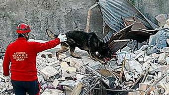 Sniffer dog searching rubble for survivors in L'Aquila.