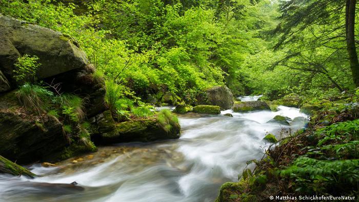O parte încă neatinsă a Parcului Național Domogled (Matthias Schickhofer/EuroNatur )
