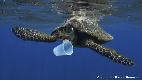 Hawksbill sea turtle trying to bite a plastic cup (picture-alliance/Photoshot)