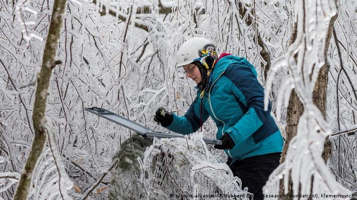 USA Forschung hubbard brook - Winterwunderwald (picture-alliance/AP/Hubbard Brook Research Foundation/J. Klementovich)
