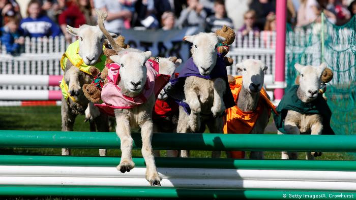 Sport kurios 2017 (Getty Images/A. Crowhurst)