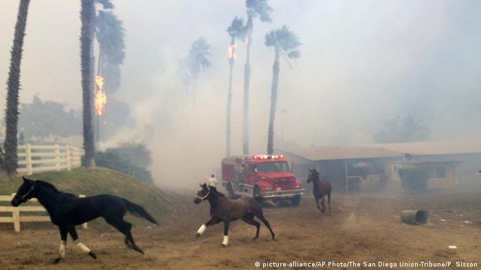 Rennpferde fliehen vor einem Feuer in der Region San Diego (Paul Sisson/The San Diego Union-Tribune via AP) |