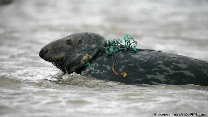 Seal tangled up in fishing net