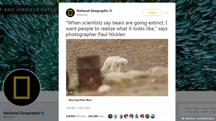 'Scene that still haunts me': Video of starving polar bear goes viral
