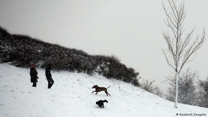 Cachorros correm sobre neve em montanha