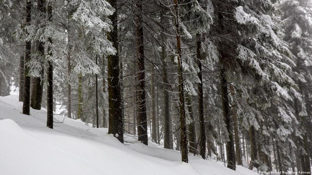Nazis and fairytales: Germany′s forests are full of hidden history
