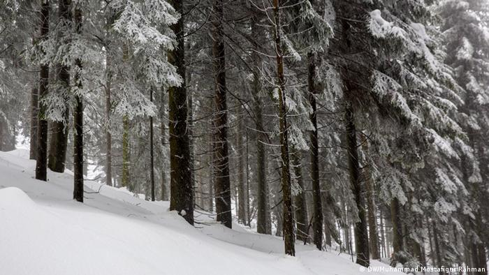 Misterioso, sombrio: neste bosque Joãozinho e Maria poderiam ter se perdido