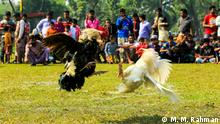 Bangladesch - Kultur - Hahnenkampf